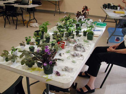 Our Leaf & Plant Exchange Table was filled to capacity! Our members have been generous this month.