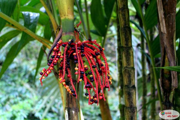 jamaikanischer Rastabusch (so heißt er wohl nicht in Wirklichkeit, aber so sieht er dann doch aus)