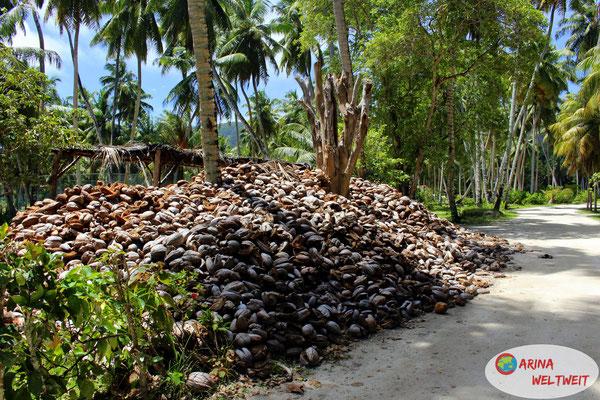ein Berg von Kokosnussschalen