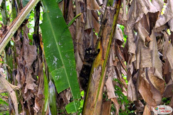 Die Katze schaute ein bisschen blöd, dass ich sie beim Klettern störte.