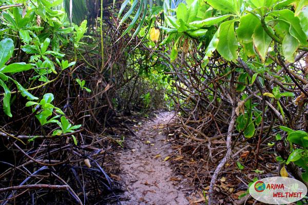 Dschungelgestrüpp-Tunnel, in der meine innovative Flaschentechnik zum Einsatz kam
