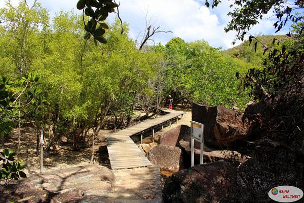 Durch die Mangroven läuft man über Stege.