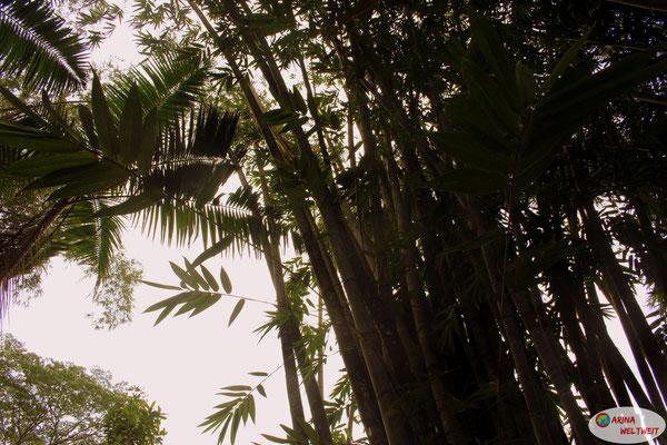 So viel Bambus....