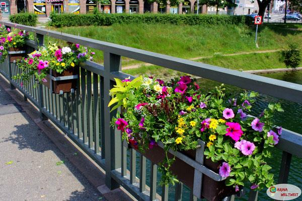 Blumen sieht man in Strasbourg überall