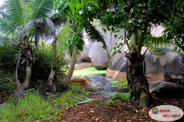 Dschungel-Tümpel