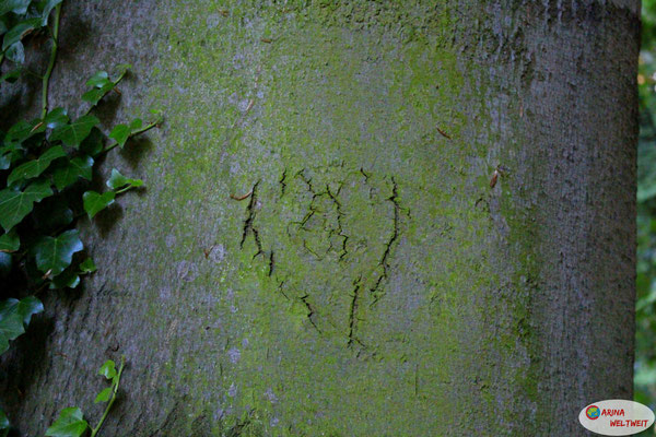 Da hat die Natur ein Herz in die Baumrinde gezaubert... Wundervoll.