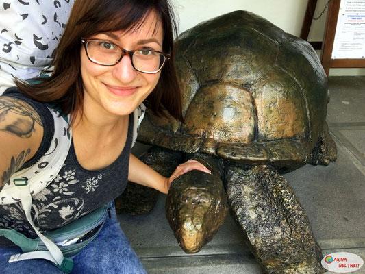 Ich hab die erste Aldabra-Riesenschildkröte gefunden...