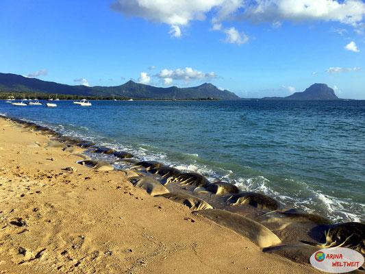 Erosionsschutz am Strand