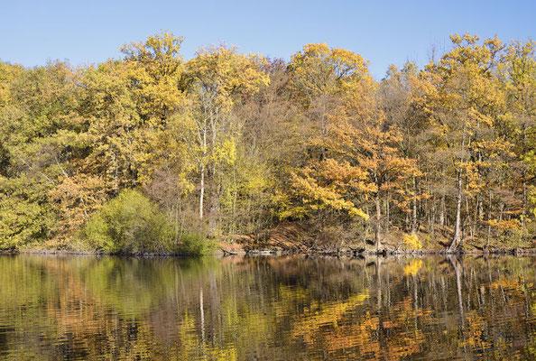 Laubbäume an einem See im Herbst, Nordrhein-Westfalen / ch185266