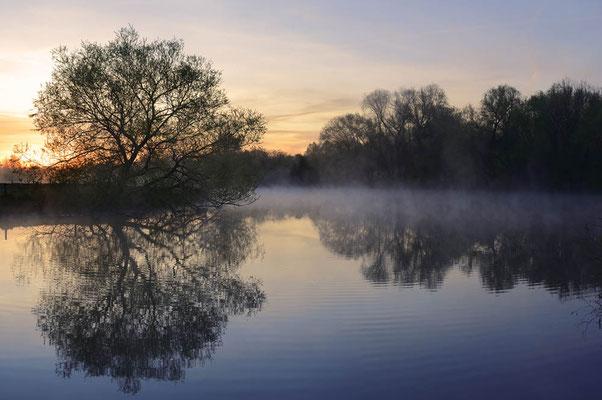 Silber-Weide (Salix alba)  an der Lippe bei Sonnenaufgang, Nordrhein-Westfalen / chpa0359