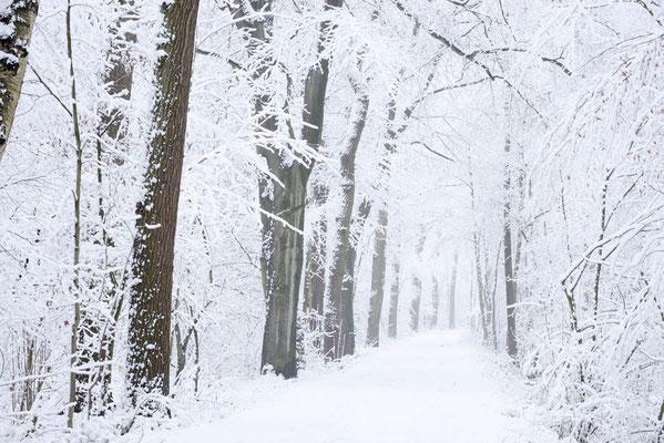 Waldweg im Winter, Nordrhein-Westfalen / ch176469
