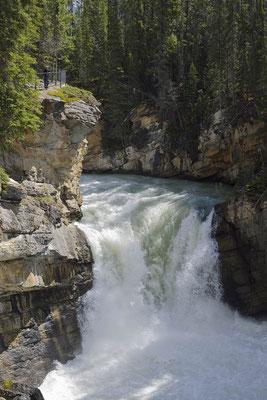 Lower Sunwapta Falls / ch157556