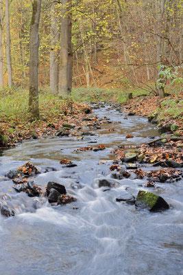 Flusslauf im Herbst, Sächsische Schweiz, Sachsen / ch193785