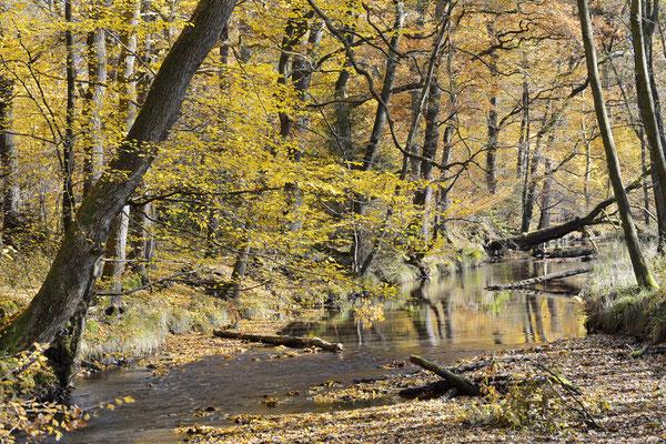Bach im Herbst, Nordrhein-Westfalen / ch165359