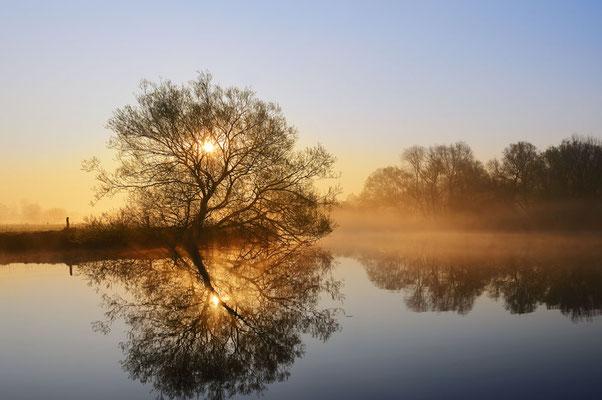 Silber-Weide (Salix alba)  an der Lippe bei Sonnenaufgang, Nordrhein-Westfalen / chpa0133