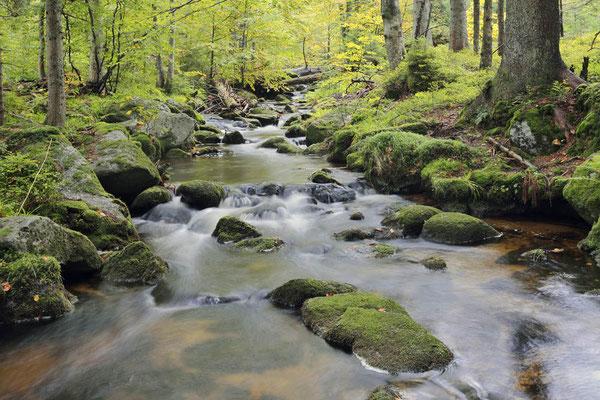 Bergbach im Herbst, Nationalpark Bayerischer Wald,  Bayern / ch168880