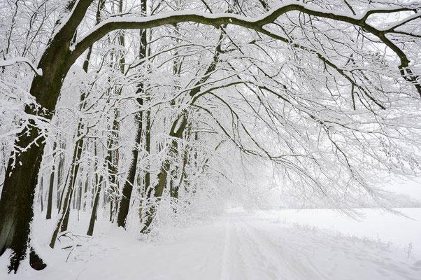 Laubbäume und Weg im Winter, Nordrhein-Westfalen / ch103926