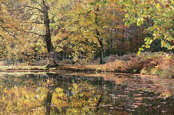 Teich im Herbst, Nordrhein-Westfalen / ch196914