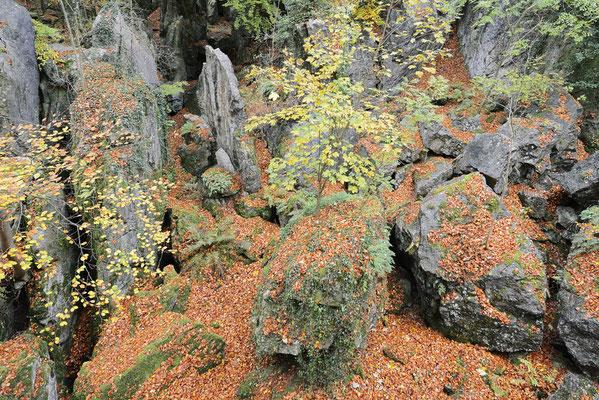 Felsenformationen im Herbst, Nordrhein-Westfalen / ch196845
