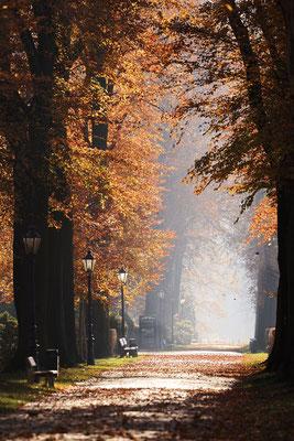 Allee mit Rotbuchen im Herbst, Nordrhein-Westfalen / ch185343
