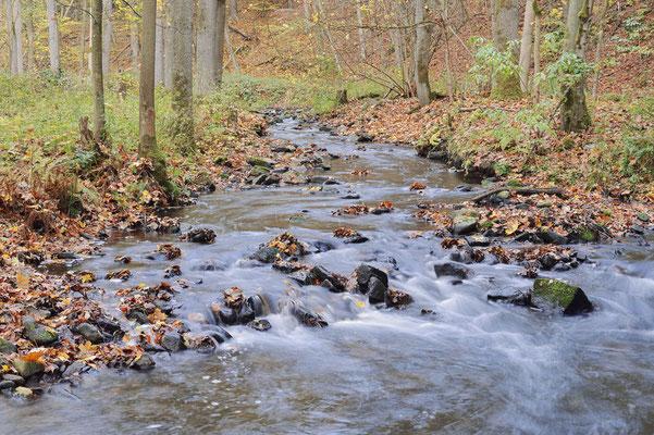 Flusslauf im Herbst, Sächsische Schweiz, Sachsen / ch193782
