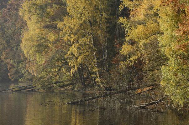 Bäume am Seeufer, Nordrhein-Westfalen / ch165381