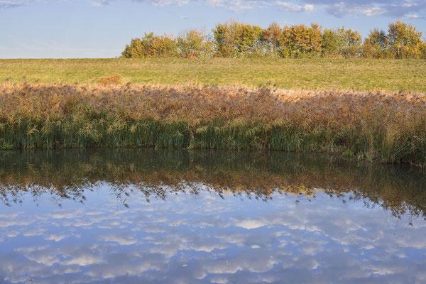 Teich mit Schilfrohr (Phragmites australis, Phragmites communis), Nordrhein-Westfalen / ch185011
