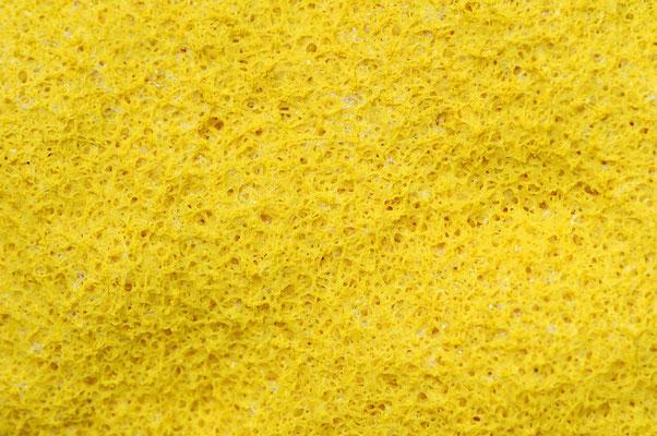 Gelbe Lohblüte (Fuligo septica) / ch102104