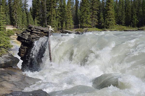 Athabasca Falls / ch157519