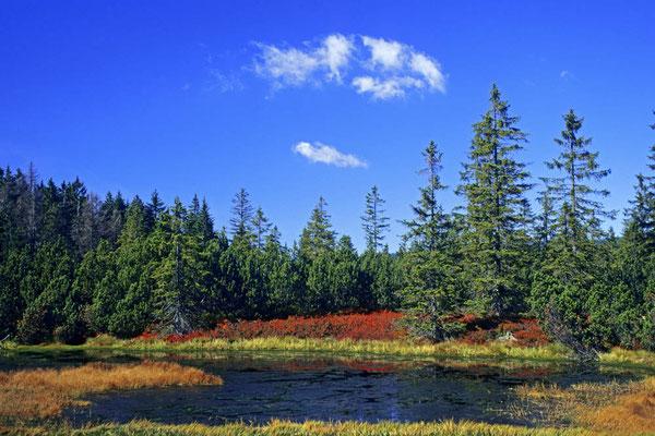 Moorsee im Herbst, Nationalpark Bayerischer Wald, Bayern / chs02413