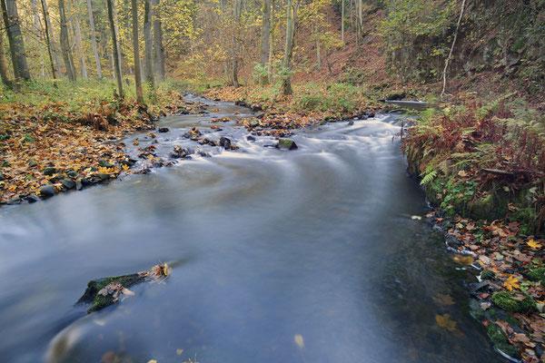 Flusslauf im Herbst, Sächsische Schweiz, Sachsen / ch193755