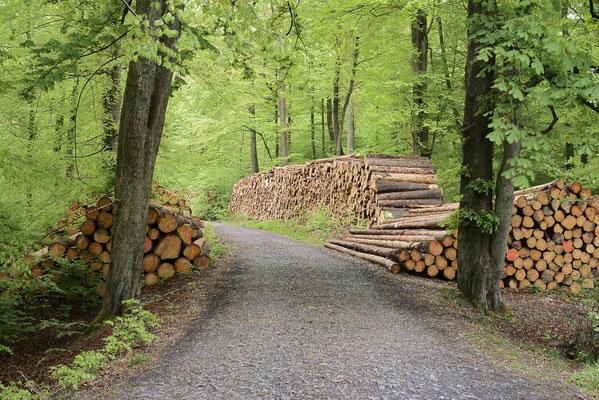 Laubwald mit gestapelten Baumstämmen am Waldweg, Nordrhein-Westfalen / ch195581