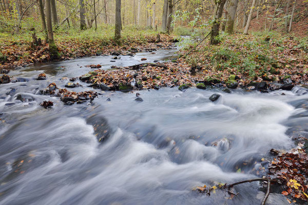 Flusslauf im Herbst, Sächsische Schweiz, Sachsen / ch193759