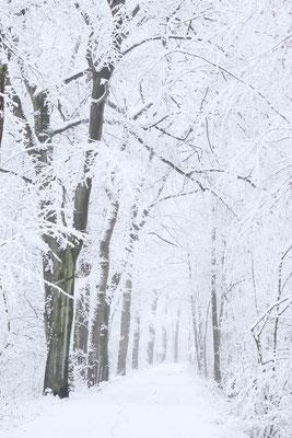 Waldweg im Winter, Nordrhein-Westfalen / ch176477