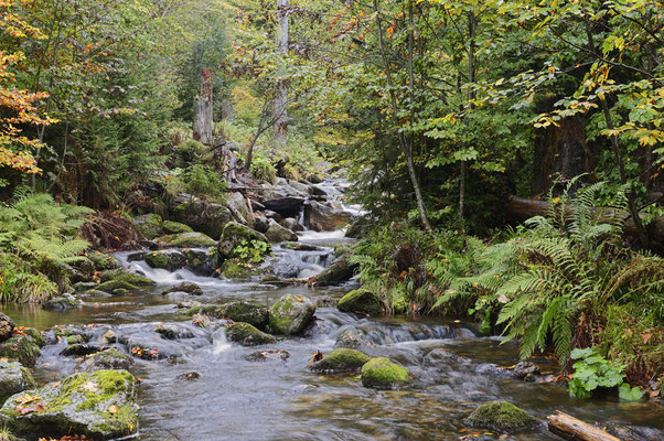 Bergbach im Herbst, Nationalpark Bayerischer Wald,  Bayern / ch168895