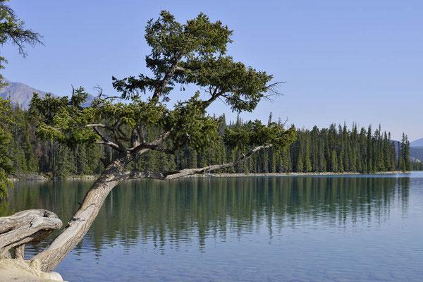 Lac Beauvert / ch157168