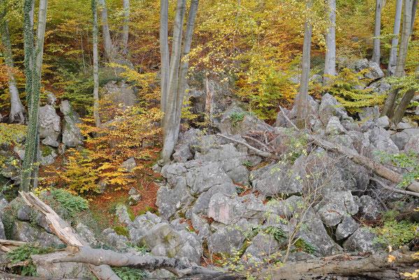 Felsenformationen und Rotbuchen (Fagus sylvatica) im Herbst, Nordrhein-Westfalen / ch196852