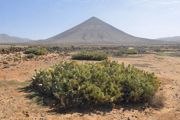 Fuerteventura, Kanarische Inseln, Spanien / ch194042