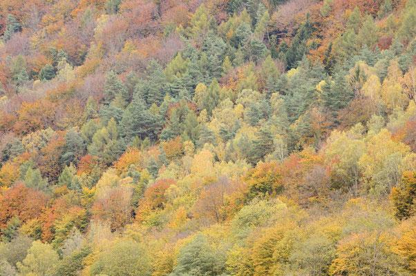 Mischwald im Herbst, Sächsische Schweiz, Sachsen / ch193544