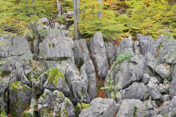 Felsenformationen und Rotbuchen (Fagus sylvatica) im Herbst, Nordrhein-Westfalen / ch196855