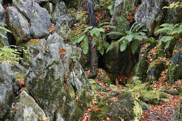 Felsenformationen im Herbst, Nordrhein-Westfalen / ch196839