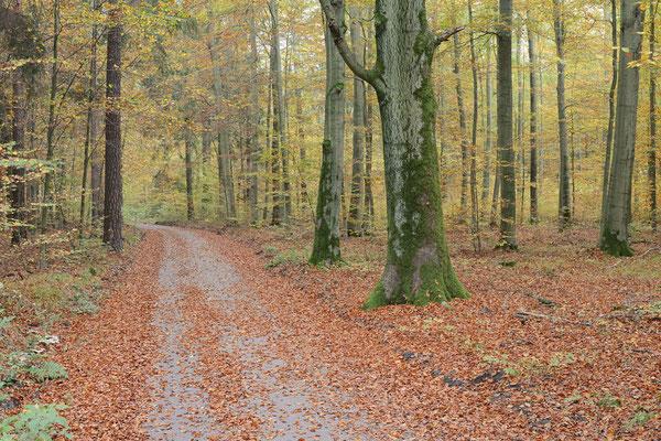 Weg in einem Mischwald im Herbst, Sächsische Schweiz, Sachsen / ch193441