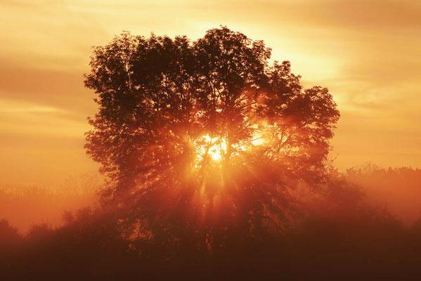 Laubbäume bei Sonnenaufgang, Nordrhein-Westfalen / ch196787