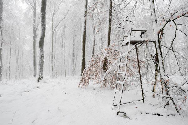 Rotbuchenwald und Hochsitz im Winter, Nordrhein-Westfalen / ch103719