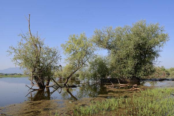 Kerkini-See, Griechenland / ch074736