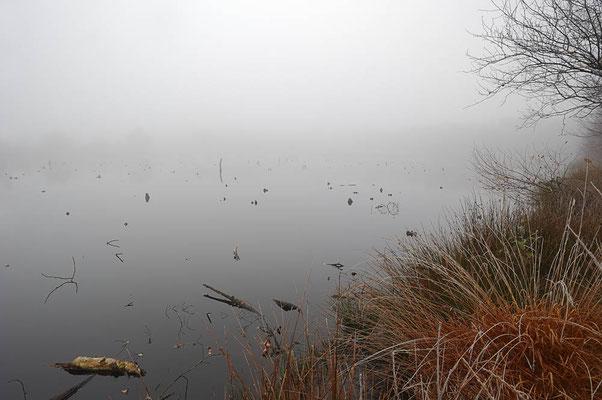 Moorsee im Nebel, Nordrhein-Westfalen / ch124265