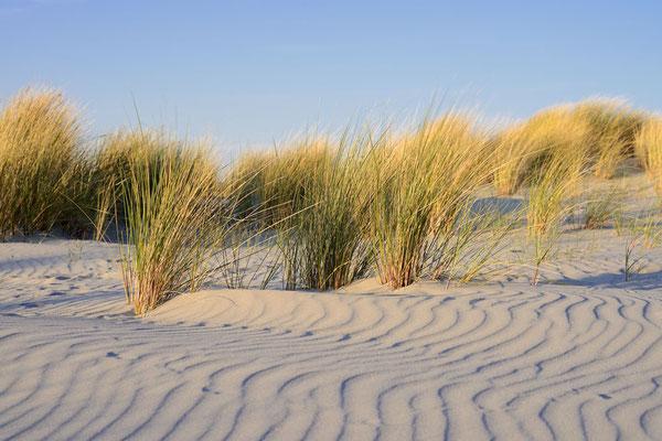 Strandhafer und Wellenstrukturen im Sand, Niederlande / ch189011