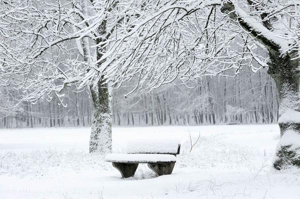 Sitzbank und Laubbäume im Winter, Nordrhein-Westfalen / ch103957
