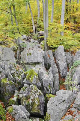Felsenformationen und Rotbuchen (Fagus sylvatica) im Herbst, Nordrhein-Westfalen / ch196861