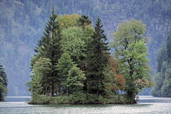 Insel Christlieger im Königssee, Nationalpark Berchtesgaden, Bayern / chs02381